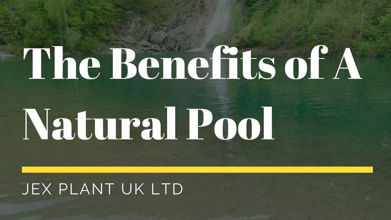 what are the benefits of a natural swimming pond_ (1)