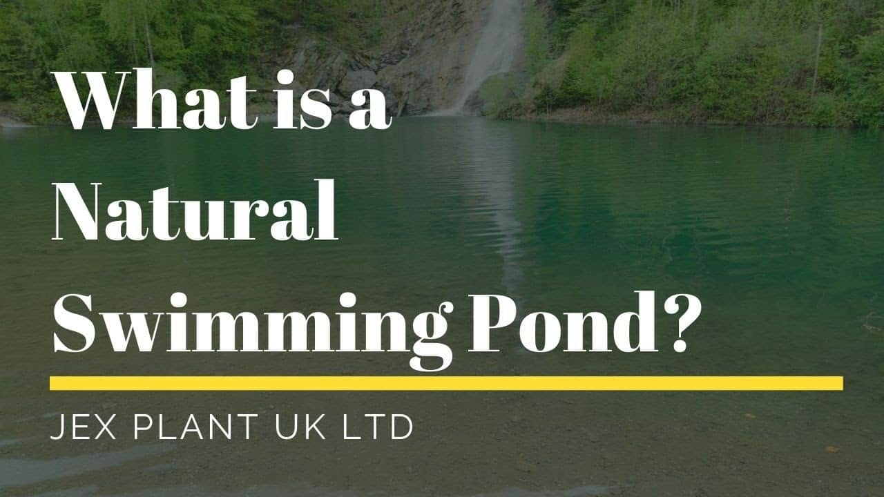 what is a natural swimming pond and how is it made_